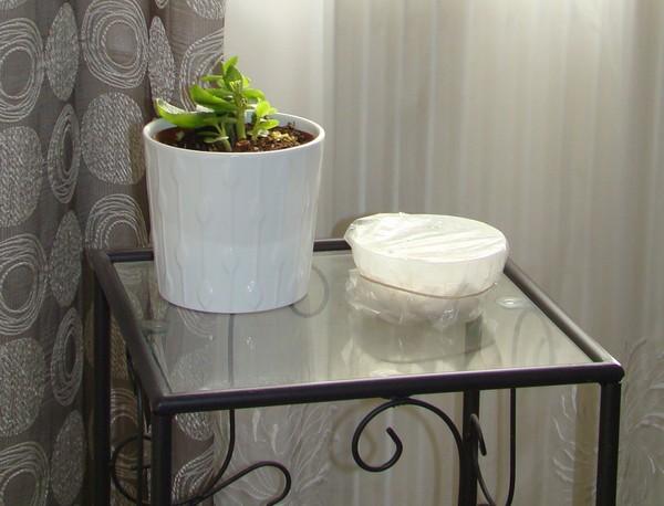 faire pousser noyau de mangue 6 jasmine and co diy et tuto de d coration orientale marocaine. Black Bedroom Furniture Sets. Home Design Ideas