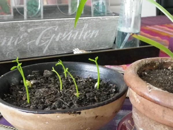 Plante qui pousse sans terre - Plante qui pousse sans terre ...