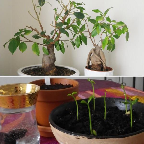 Semis, et autres expériences végétales - Jasmine and Co - DIY et tuto de décoration orientale ...