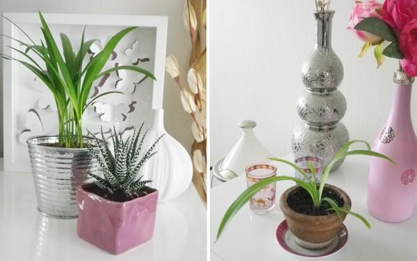 plante décoration orientale