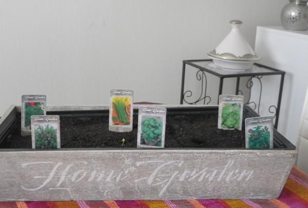 semis plante aromatique