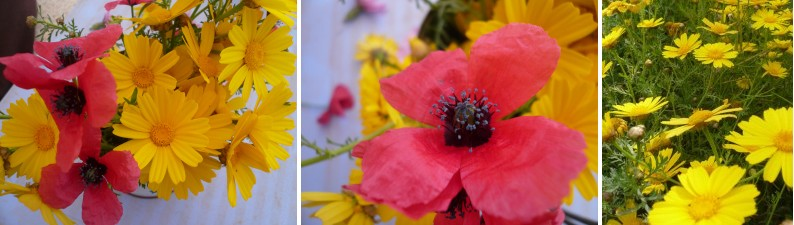 fleur tunisie