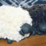 mouton activité