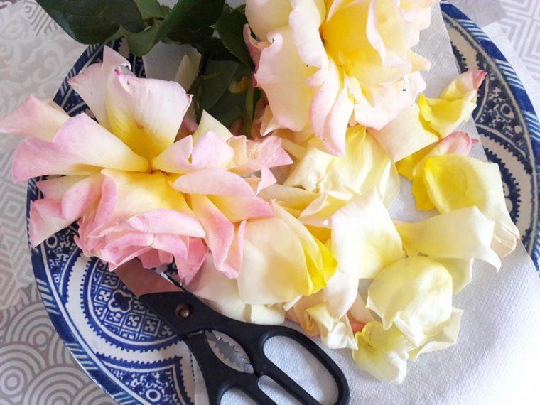 Faire sécher des pétales de rose avec un déshydrateur