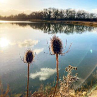 On l'a enfin trouvé cet étang caché ! Il est du côté de notre futur maison et il parait qu'il y a du poisson 🐟  C'est une ancienne carrière à proximité de la Loire.  Ça sent les futures parties de pêche !   #pêche #loiretcher #loiretchertourisme #loire