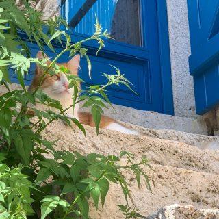 Petit chat prend ses repères petit à petit, tout comme nous 🏡